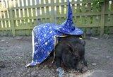 """""""Specialių galių"""" turinti Anglijos kiaulė pateikė prognozes, kas pateks į pasaulio futbolo čempionato pusfinalį"""