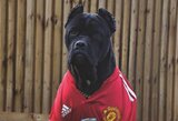 """Pamatykite: """"Manchester United"""" žvaigždė parodė naują, klubo marškinėliais pasipuošusį, augintinį"""
