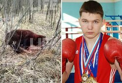 Su draugą pražudžiusia meška susikibęs boksininkas –kritinėje būklėje
